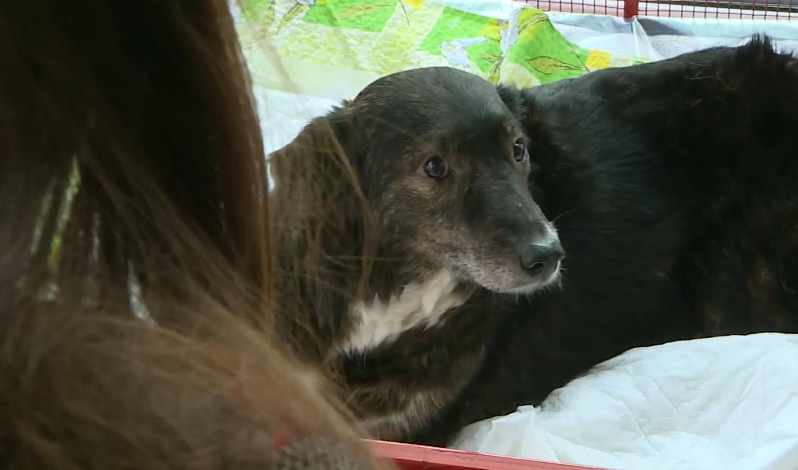 Photo of video   Câinele găsit în Chișinău cu labele mutilate a fost adoptat și are și cont de Instagram