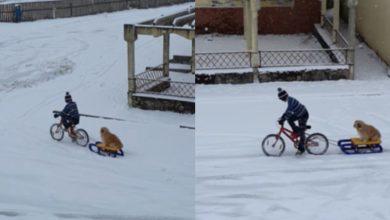Photo of video | Prietenia înseamnă… să urci pe bicicletă pentru a-ți plimba cățelul cu sania! Gestul care l-a făcut celebru pe un copil din Cluj