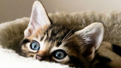 """Photo of Pisica i-a salvat viața! O felină """"a cerut"""" ajutorul vecinilor după ce stăpânul său s-a prăbușit la podea"""