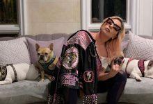 Photo of Cei doi câini ai cântăreței Lady Gaga furați în Los Angeles au fost recuperați de oamenii legii