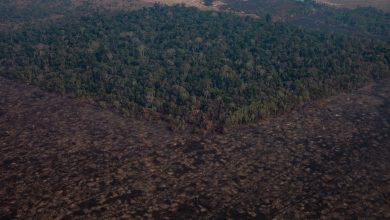 Photo of Pădurile tropicale sunt distruse și degradate cu rapiditate. O arie de dimensiunea teritoriului Franței, distrusă în ultimii ani