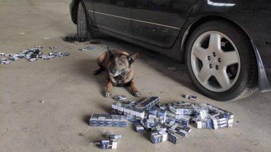 Photo of video | A ascuns țigările în Lexus, dar patrupedul de la frontieră l-a lăsat fără mașină. Nero a găsit dosite 400 de pachete
