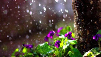 Photo of meteo | Ploile de primăvară ne vor bate la geam! Sunt prognozate precipitații pe întreg teritoriul țării