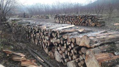 Photo of Moldsilva a interzis să se filmeze tăierea copacilor din păduri în absența silvicultorilor. Reacția agenției