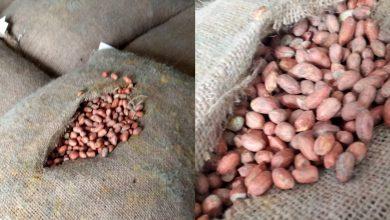 Photo of Alune cu mucegai, depistate la vamă. Urmau să fie comercializate pe piața din Republica Moldova
