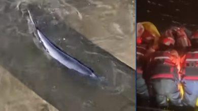 Photo of video | O balenă a rămas blocată pe râul Tamisa. Zeci de salvatori și sute de oameni s-au adunat pentru a o ajuta