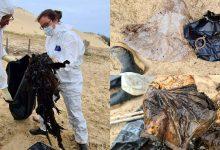 Photo of foto | Circa 16 kg de plastic au fost descoperite în burta unei balene. Nu putea să vâneze și a încurcat deșeurile cu meduzele