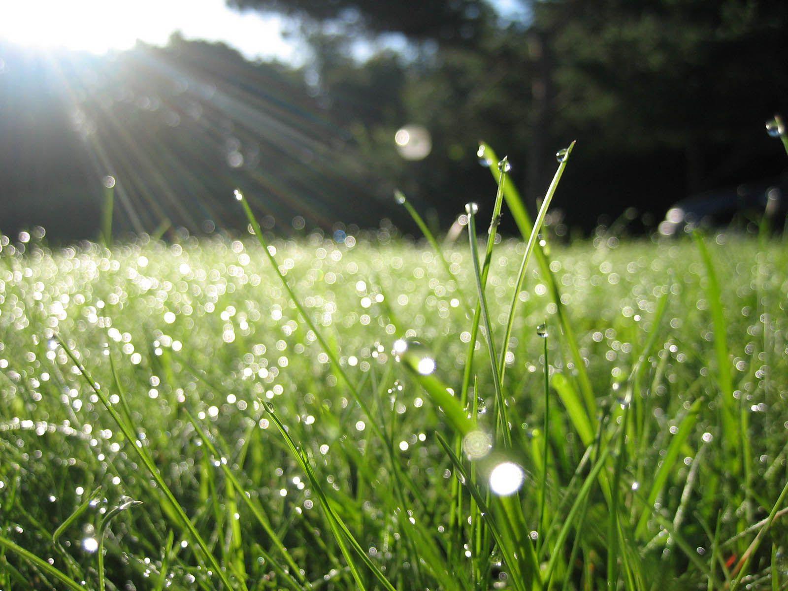 Meteo ploaie iarbă