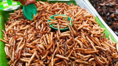 Photo of Comisia Europeană a autorizat, în premieră, o insectă ca aliment