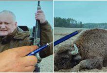 """Photo of """"N-a împușcat niciodată zimbri"""": PSRM susține că poza cu Dodon alături de animalul mort este falsă"""