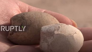 Photo of video | Unde au fost găsite peste 160 de ouă de păsări, vechi de 85 de milioane de ani