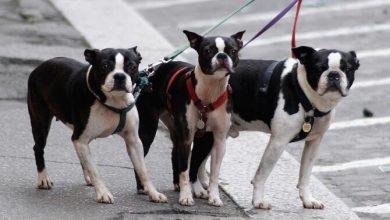 Photo of Proprietarii de câini din Tel Aviv, obligați să ofere mostre din ADN-ul animalului: Cum încearcă autoritățile să păstreze orașul curat