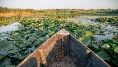 """Photo of Rezervația biosferei """"Prutul de Jos"""", inclusă în Rețeaua UNESCO, va activa în baza unui Regulament aprobat de Guvern"""