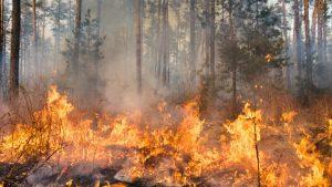 Valul sever de căldură provoacă incendii de vegetație în Bulgaria. Au fost înregistrate maxime de peste 40 de grade