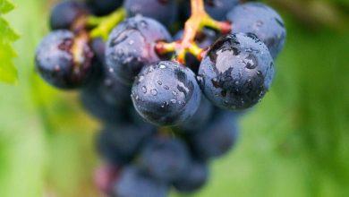 Photo of Fierbinte, ploioasă, cu aromă de prune și struguri. Prognozele meteorologilor pentru această săptămână