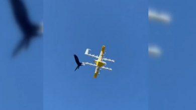 Photo of video | Mai multe drone de livrări, atacate de corbi. O companie a fost nevoită să-și sisteze activitate