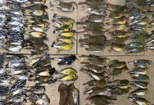 Photo of Măcel pe trotuarele New York-ului. Sute de păsări migratoare au murit lovindu-se de zgârie-nori